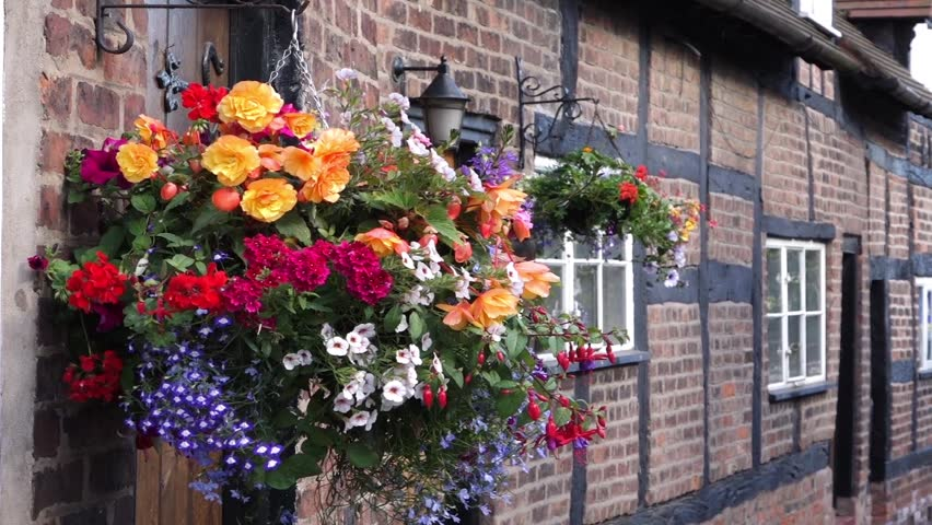 Hanging Flowers Outside a House Stock Footage Video (100% Royalty,free)  6782713