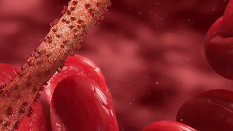Ebola Virus Pathogens are floating in a human blood stream for infection. One ebola virus after another appears in the camera. The animation is rendered in HQ after the epidemic in western africa.