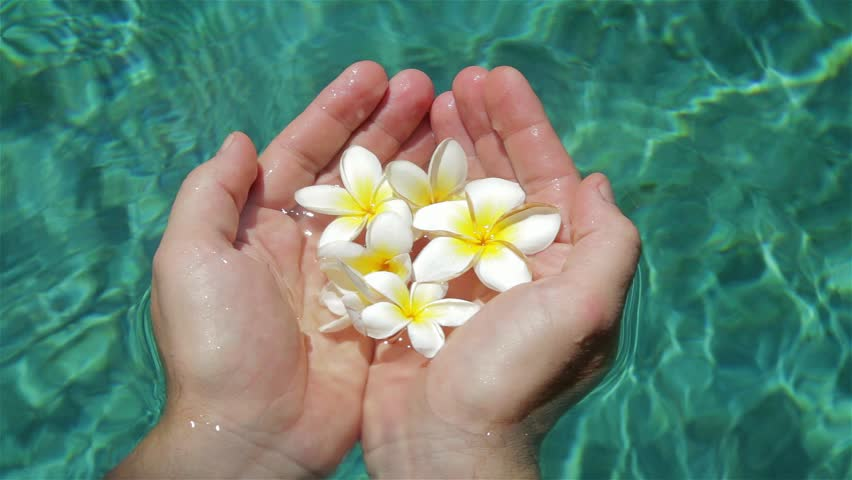 Frangipani flower on the pool concept for relax and spa for Floating flowers in water