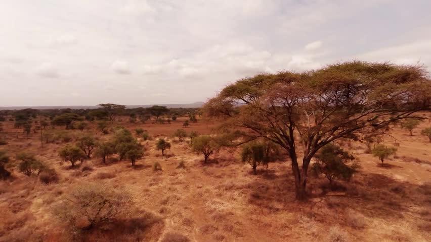 Header of savanna