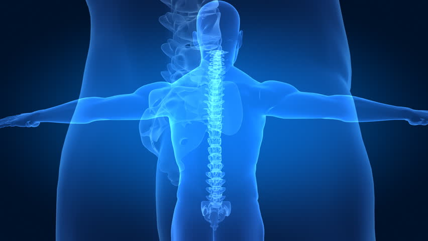 Correct posture concept with x-ray spine