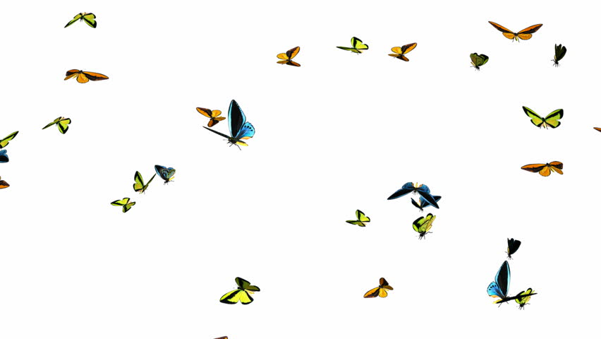 Looping Butterflies Slow Swarm Animation 1 With Alpha Mask Isolated On White