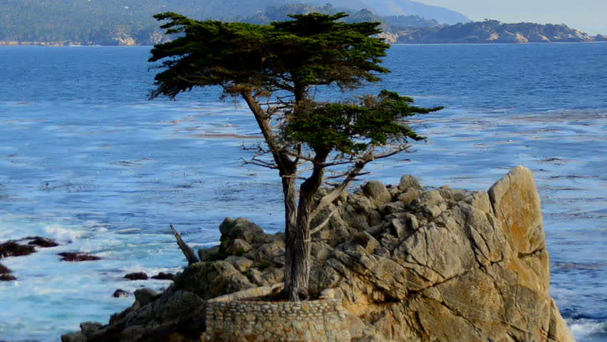 Time Lapse Of Lone Cypress Stock Footage Video 100 Royalty Free 7282183 Shutterstock