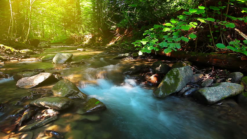 Mountain stream in the forest | Shutterstock HD Video #7371043