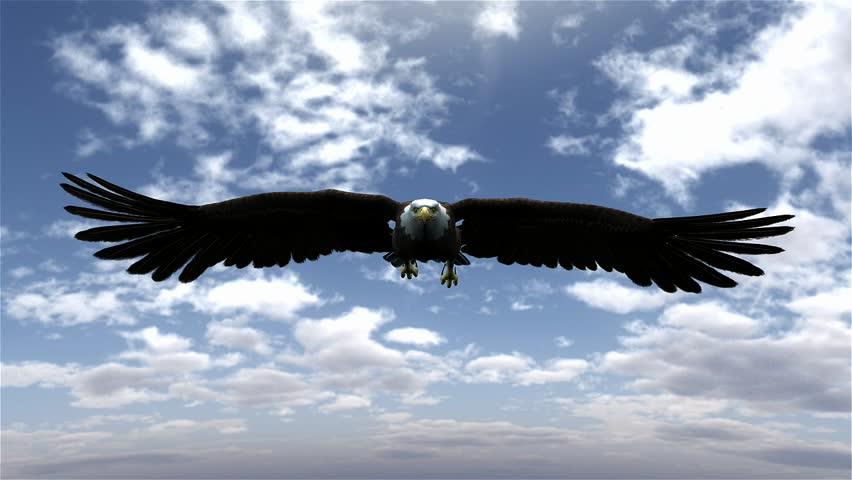 Bald eagle flying stock footage video shutterstock american bald eagle hunting flying in a blue sky altavistaventures Images