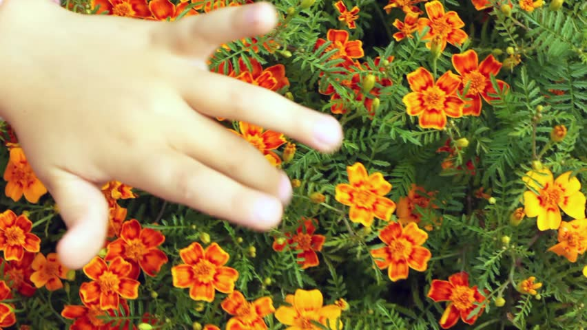 children hands touch fingers of head of flowers and those shake