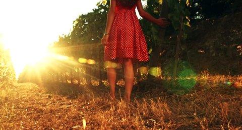 Pretty Barefoot Woman Walking Toward Sunset at Vineyard Freedom Salvation