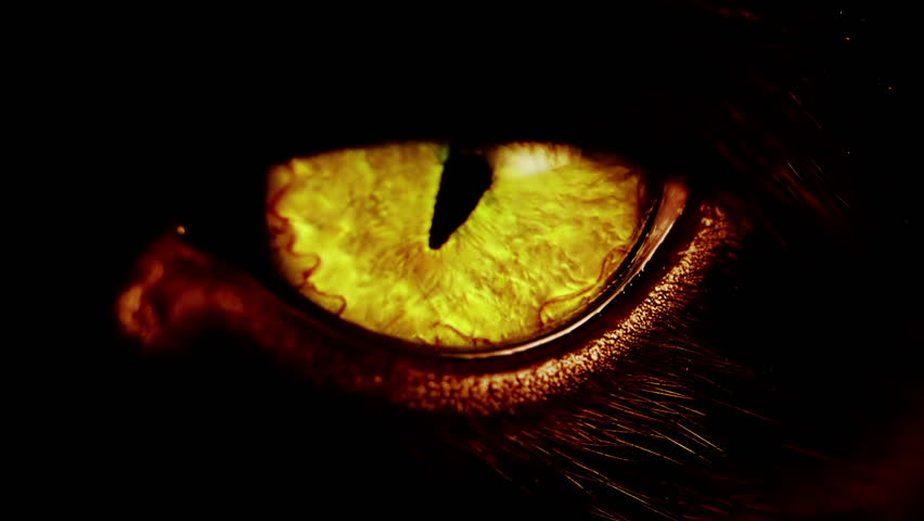 Black Cat With Pink Scary Eyes: Stock Video Clip Of Macro Shot Of A Yellow Cat Eye