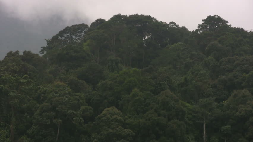 Rain forest logging in Vietnam
