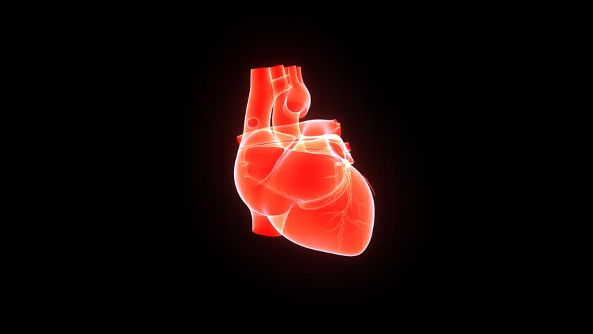 Human Heart | Shutterstock HD Video #7833883