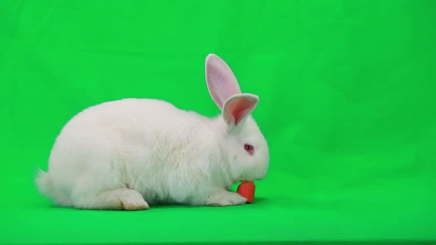 Rabbit with carrot on green screen #7835293