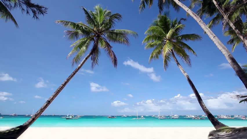Two palms on beautiful tropical beach. Nobody on coastline