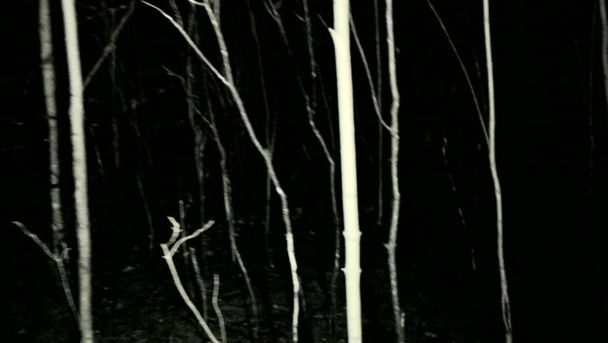 POV shot walking/running through dark spooky forest at night.  | Shutterstock HD Video #7918816