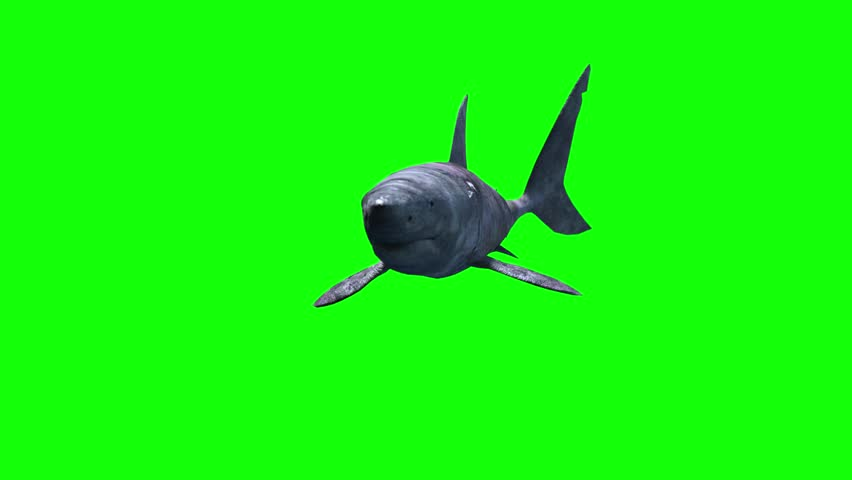 shark swims, snaps and bites  clip green screen video footage #8093233