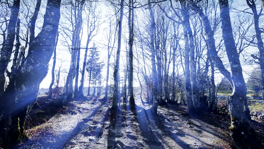 Forest Trees Woods Nature Background Stock Footage Video 100 Royalty Free 8112313 Shutterstock