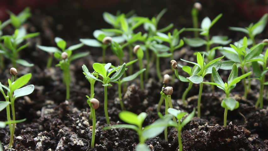 Splashing houseplant. | Shutterstock HD Video #8186323