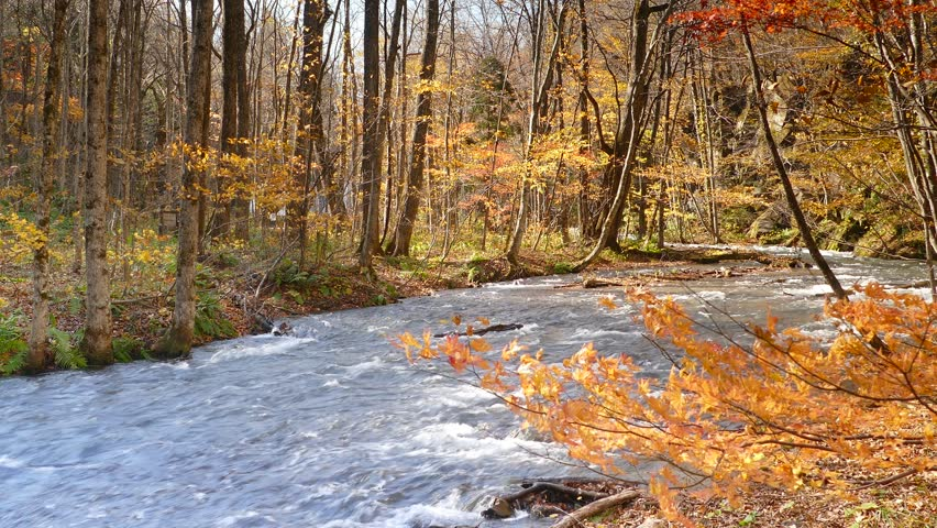Autumn Colors of Oirase River, located at Aomori Prefecture Japan  | Shutterstock HD Video #8270173