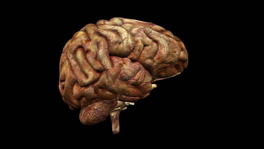 счет гифка мозга нет важно, чтобы нашей