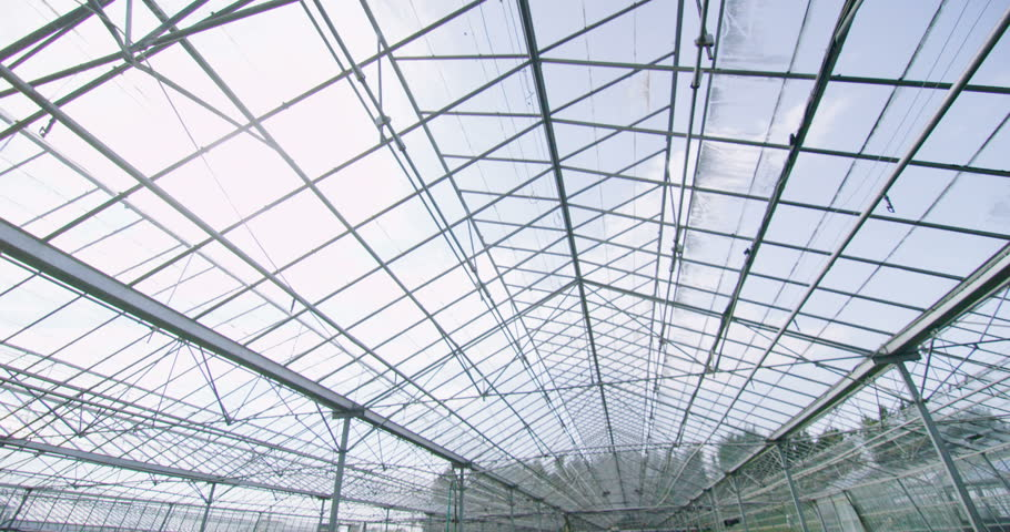 4K Rows Of Many Young Plants Growing In A Large Commercial Nursery  Greenhouse   4K Stock