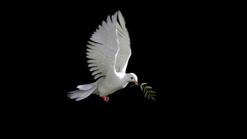 White Dove and olive branch. seamless animation