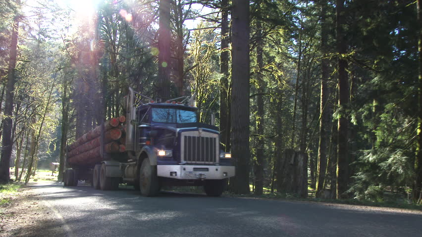 Logging truck with full load of fresh cut trees driving up forest road in Pacific Northwest, Oregon.