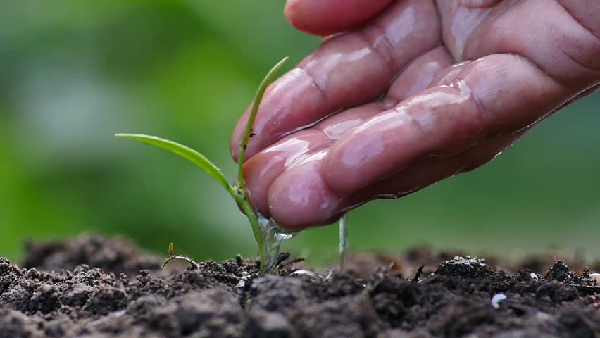 Seeding,Seedling,Male hand watering young plant over green background,seed planting