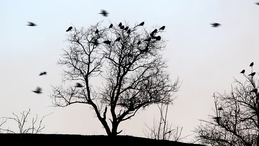 Stock Video Clip Of Flock Of Birds Flying Against A Tree Shutterstock