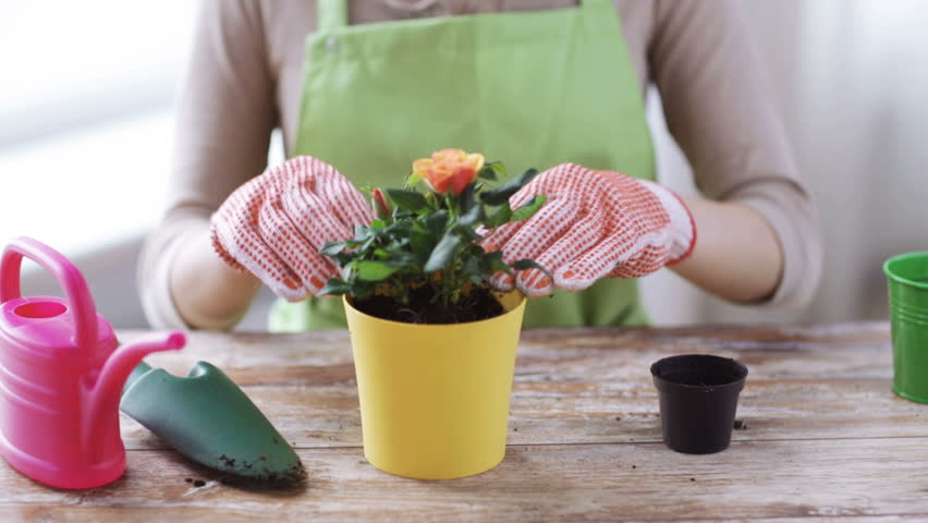 people gardening flower planting and profession concept close up of woman or gardener