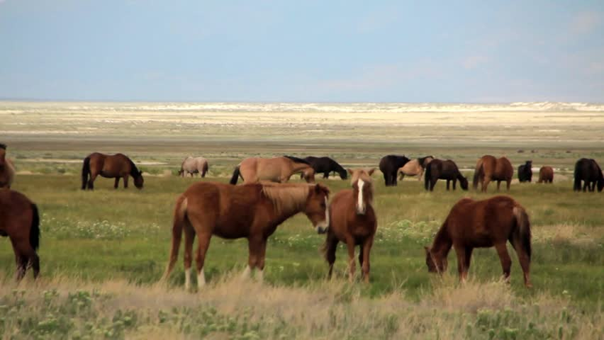 Wild Mustangs Herd on a field.Part 1 | Shutterstock HD Video #9219113