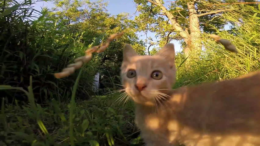 Funny Little cat playing hunting the camera #9227090
