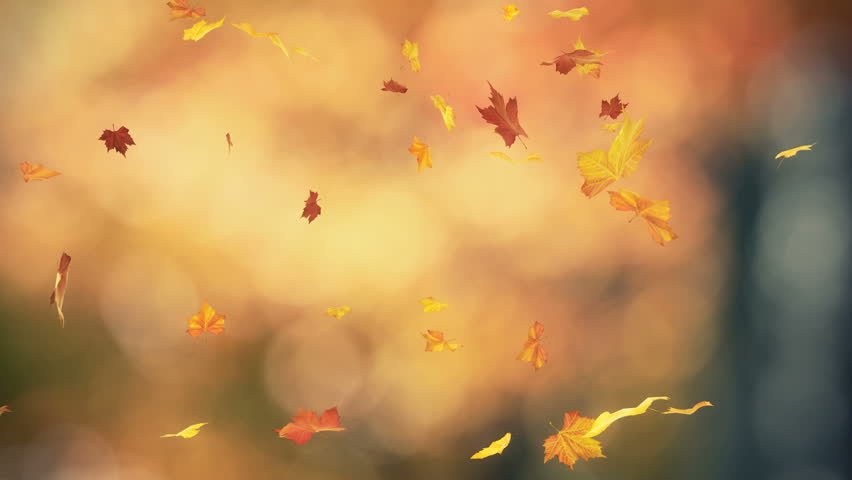 Falling autumn leaves backgrounds - loopable  #935158