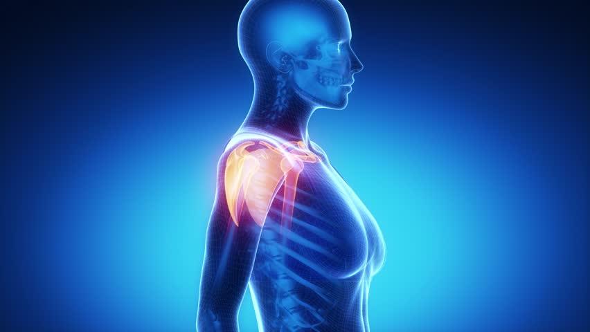 Stock video of shoulder ligaments anatomy   4366199   Shutterstock