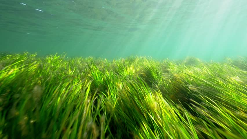 Seagrass in slow motion