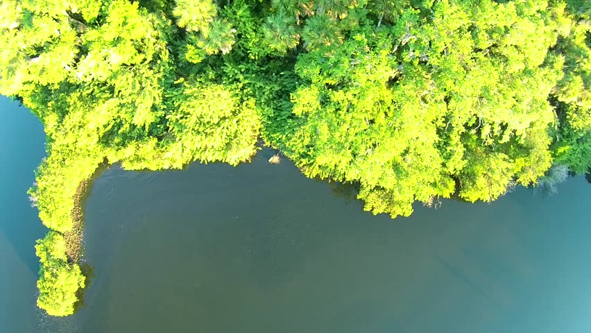 Jungle aerial view palm trees and mangroves 90 degrees down, water. | Shutterstock HD Video #9425363