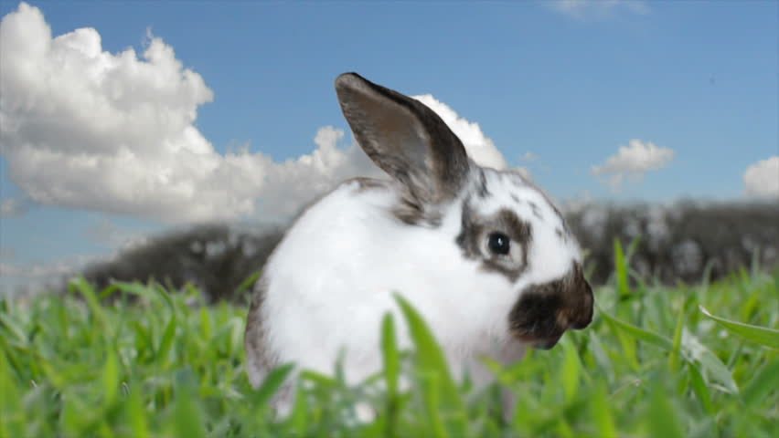 Rabbit eats grass | Shutterstock HD Video #9572663