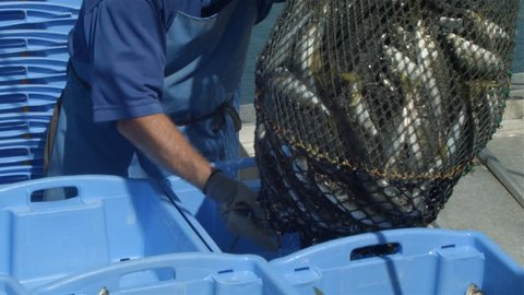 Commercial fishing industry fisherman putting fish catch on boat at fishing docks.