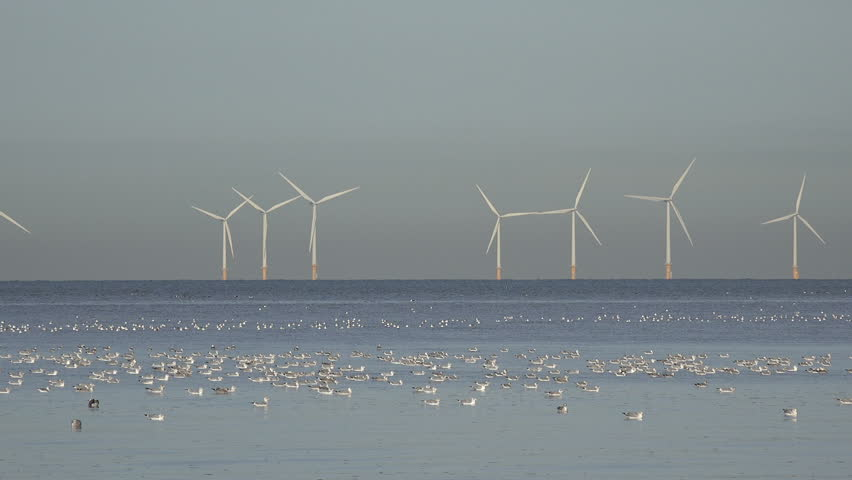 Wind turbines in Irish Sea in Liverpool Bay with sea birds in foreground at high tide, England